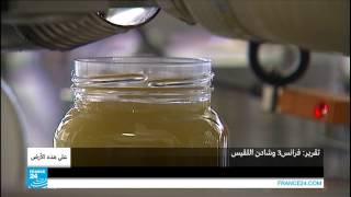 ...المغرب.. إنتاج المياه عبر تركيب شباك تلتقط قطرات الضب