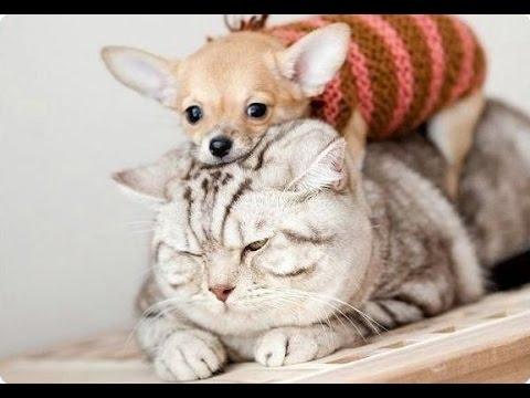 Вопрос: Нужны ли животные в доме (кошки, собаки )?