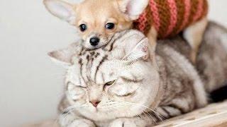 Как кошка с собакой? О двух животный в доме - нюансы и вопросы жизни двух животных
