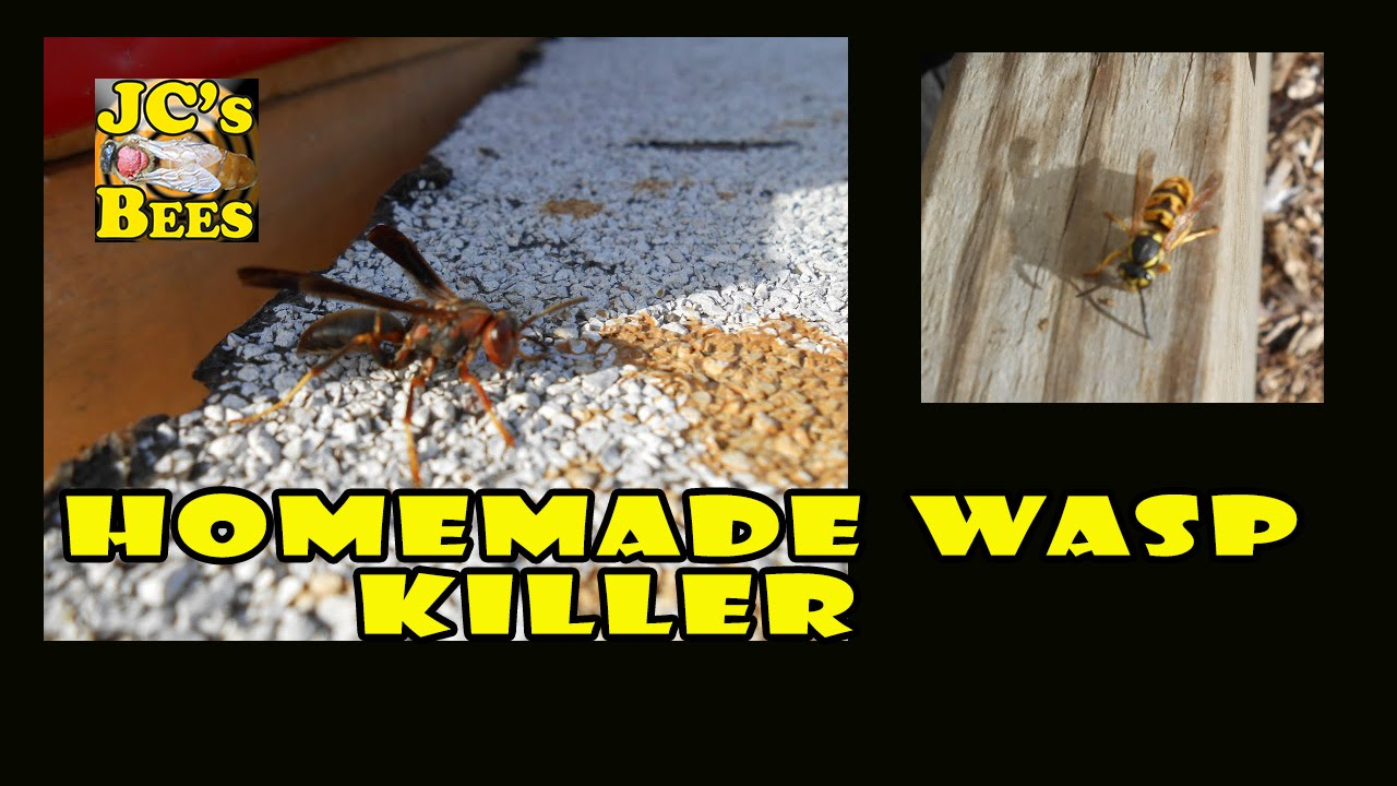 Homemade Wasp/ Yellow Jacket Killer