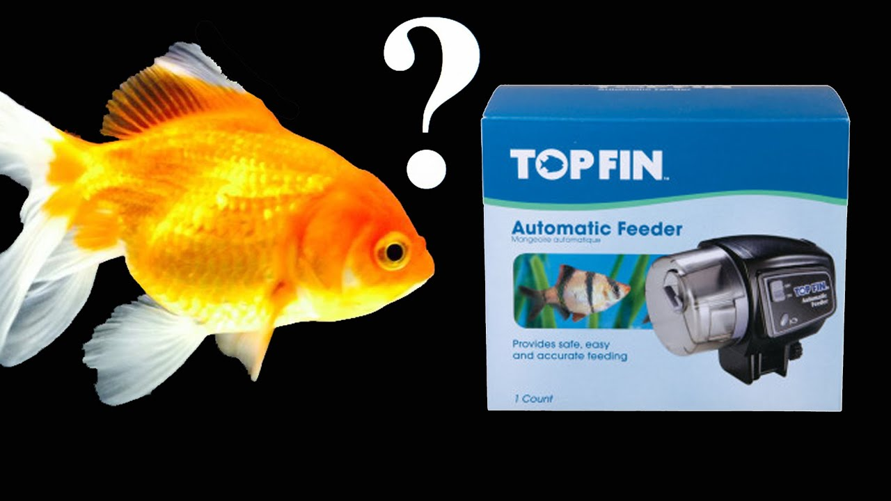 pin auto aquarium automatic operated feeder food battery device saim timer fish
