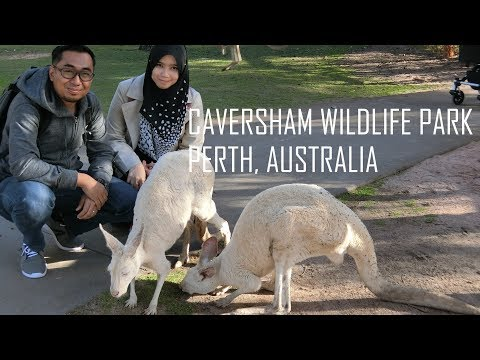Play with Kangaroo at Caversham Wildlife Park Perth Australia