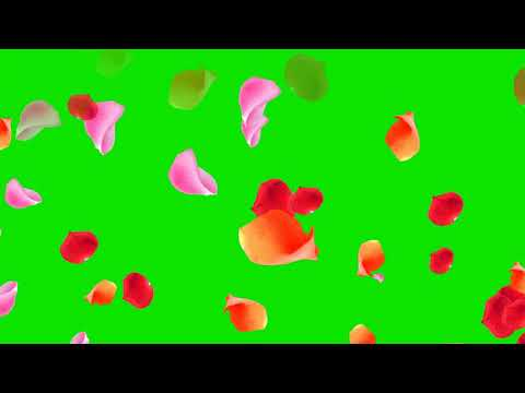 FLOWER PEDALS GREEN SCREEN EFFECT thumbnail