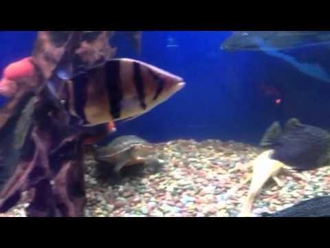 San Jose King Aquarium