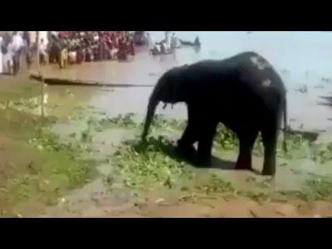 Three Elephants rescued in Kebbi