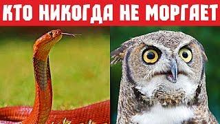 Как хорошо вы знаете животных? Тест. Часть 2