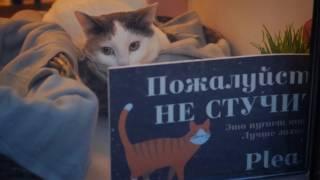 Soulmate — котокафе в Санкт-Петербурге