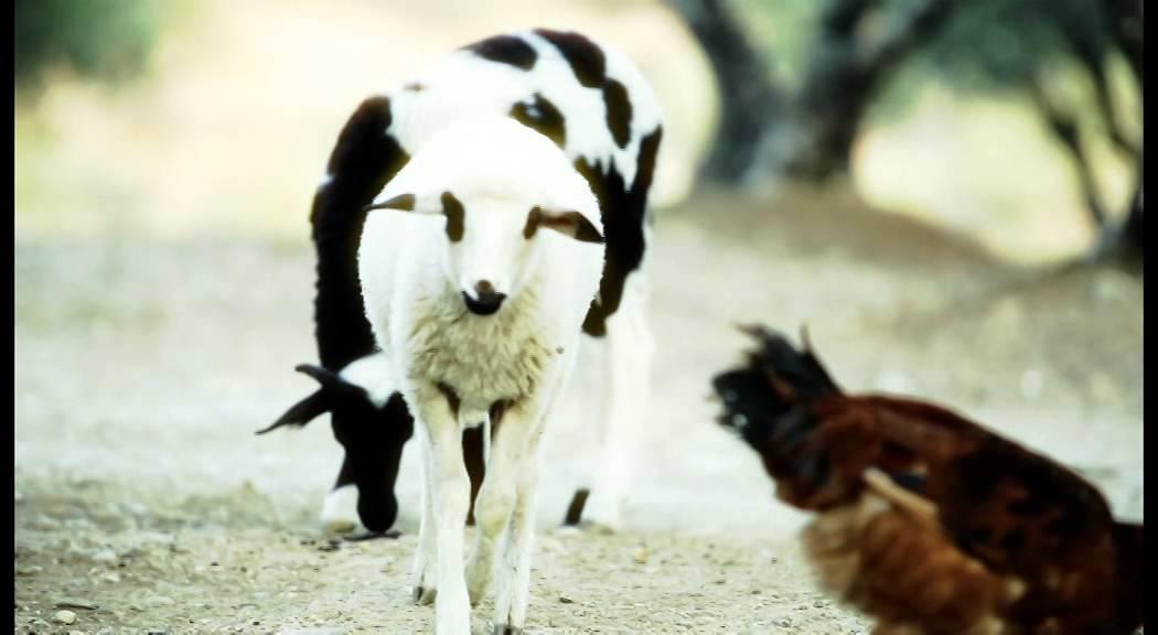 Ζώων Θρέψις ( Προδιαφήμιση ) @2014