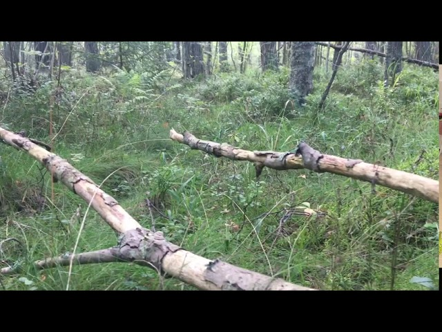 Filosofía en el bosque 33. Buda en el bosque.