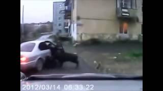 Pig Attack Compilation