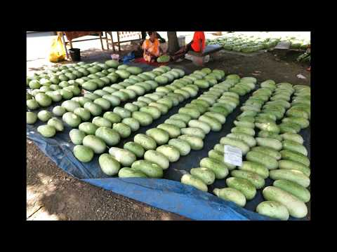 Port Vila Markets - Plan and Book your Vanuatu Holiday on Www.BigBall.World