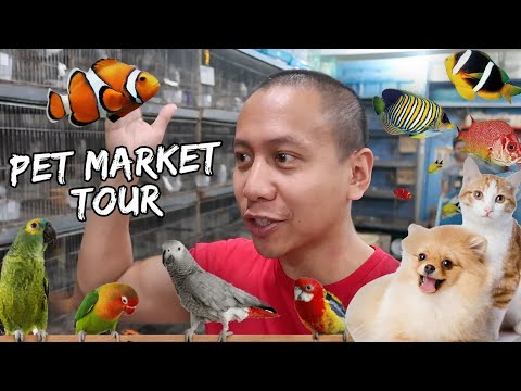 Pet Market Tour | Vlog #370