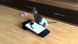 Котёнок-инвалид учится ходить в памперсе (июль, 2014)