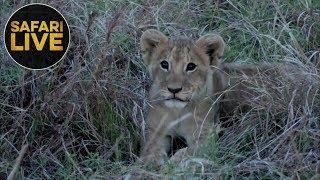safariLIVE - Sunset Safari - November 8, 2018