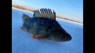 Что за рыбина клюнула на балансир рыбалка на окуня и щуку 2020 2021