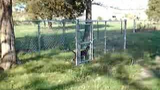 Beagle Escapes