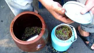 Начинаем делать вино из винограда Лидия