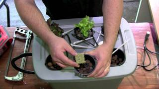 How To Build A Hydroponic System Part 2