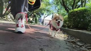 今日はチョッピと豊国神社へ行ってきました。 http://toyokunijinjya.ma...