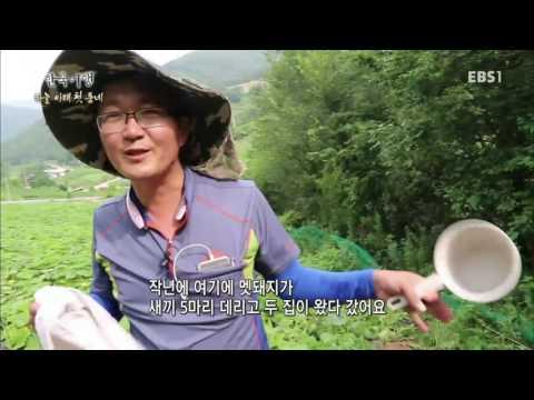 한국기행 - Korea travel_하늘 아래 첫 동네 3부 깊은 산 속 보물섬_#002