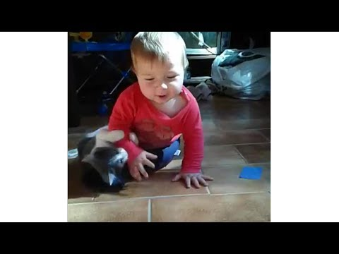 Baby and Cat Fun and Fails 😽👶🏽 Funny Baby Video