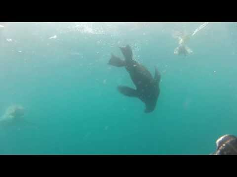 Megalodon Vs Orca [Killer Whale]: Who Would Win? by Max