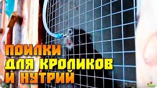 видео Поилки и кормушки для грызунов