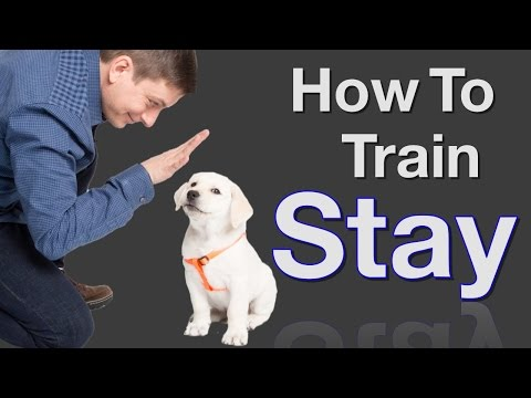 how-to-teach-your-dog-to-stay-in-3-steps-force-free!