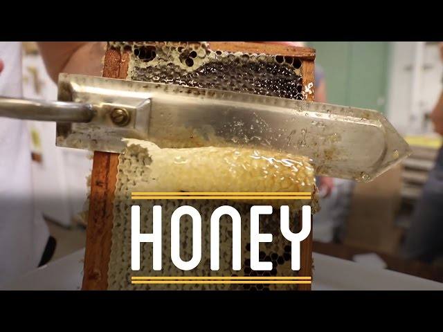 Honey | How to Make Everything: Sandwich (3/12)