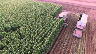 Arizona corn silage harvest July 2015 at A & B Farms - Brian Rhodes.  Near Maricopa, Arizona