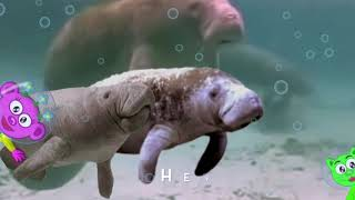 What's So Cool About A Manatee? Planet Peek-A-Boo Productions~IcaBoo Music