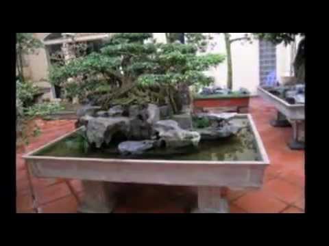 Cây Cảnh Bon Sai Việt Nam  HD Full