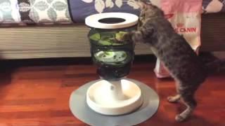 Супер игрушки для супер кошек. Toys for cats