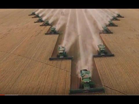 12 комбайнов синхронно собирают зерно.