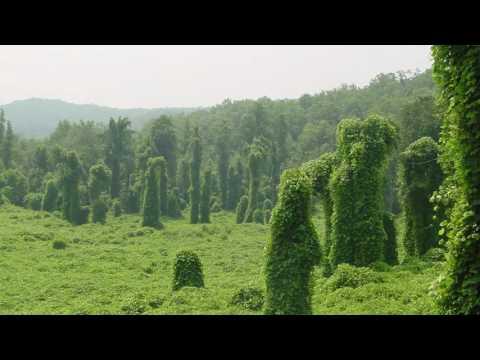 Kudzu - Music Video