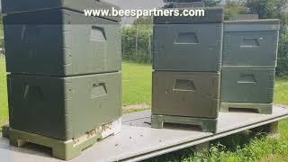 مجزرة ذكور النحل/ سبب موت ذكور النحل/وظيفة ذكور النحل/#bees #honeybee #honey #bee