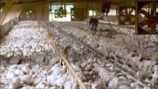 Food, Inc.: Chicken Coop Conditions thumbnail