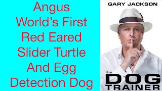 World's First Slider Turtle & Egg Detection Dog