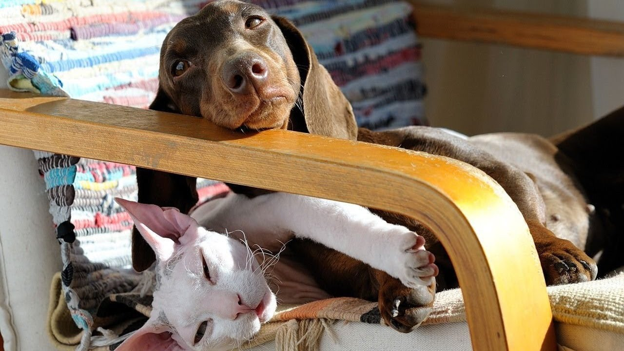 Cute Dogs and Cats Doing Funny Things – CompiIation
