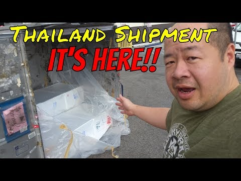 *IMPORT* And *UNBOXING* LIVE TROPICAL FISH From THAILAND - Part 1