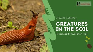 Growing Together | Creatures in the Soil