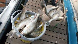 НАКОНЕЦ ТО КЛЮЕТ Судак на крупный силикон в конце октября Рыбалка на Обском водохранилище 2020