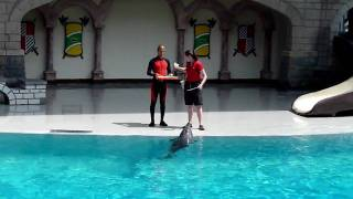 Marineland - Dolphin & Seal show (Part 1)