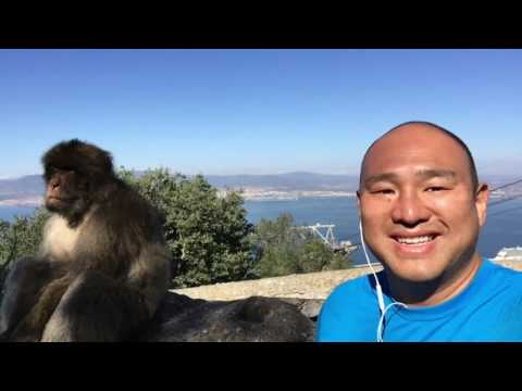 Monkeys in Gibraltar! Brits and Barbary Apes.