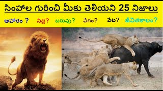 25 Unknown & Interesting facts about LIONS in Telugu || The LION KING || Telugu Knowledge