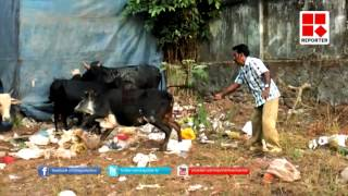 Cruelty to Animals in Trissur, Kerala