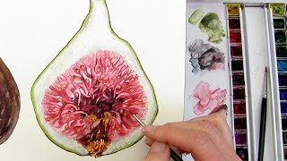 How to paint the juicy inside of a fig in watercolour by Anna Mason