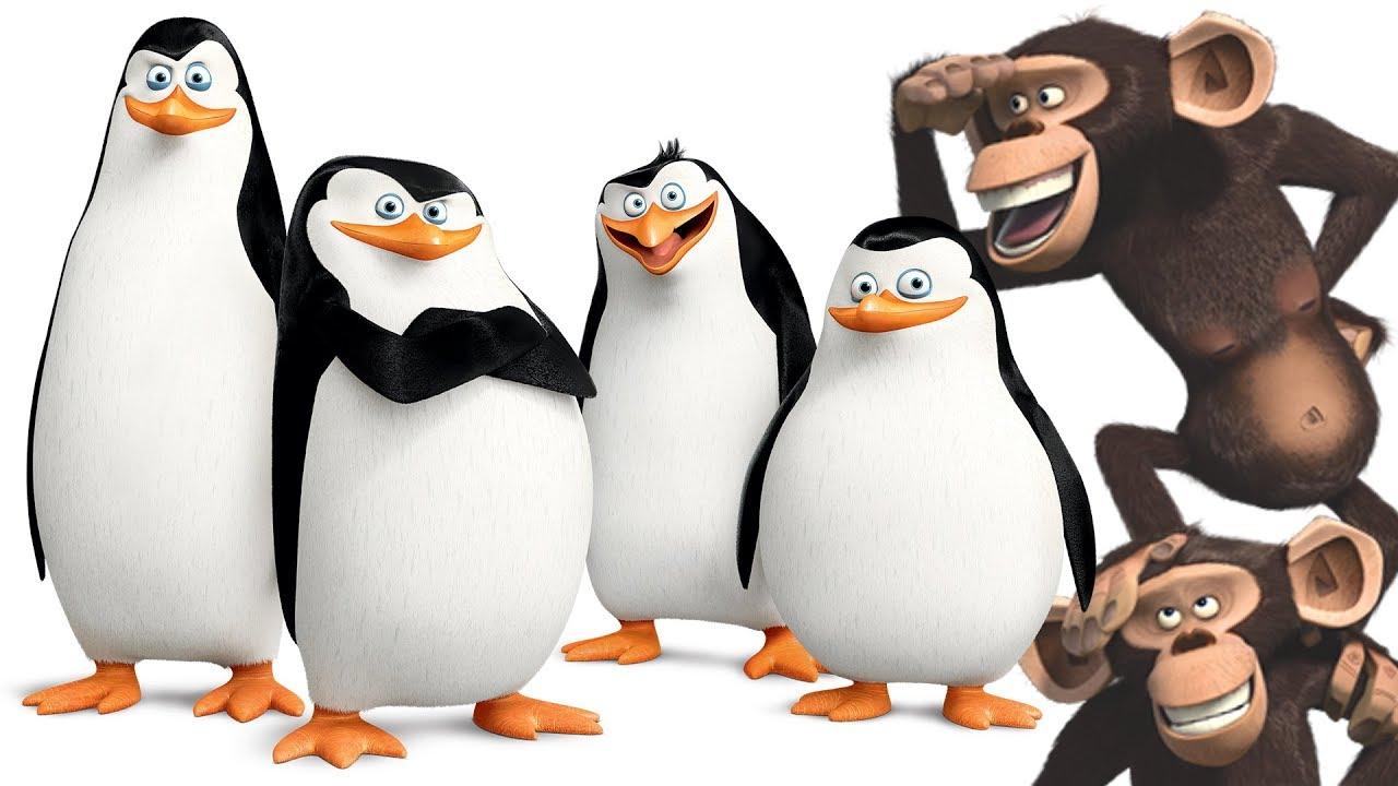 penguins of madagascar full episode english game penguins monkey rh youtube com Southern Rockhopper Penguin Southern Rockhopper Penguin