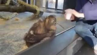 Прикол с обезьяной ;)