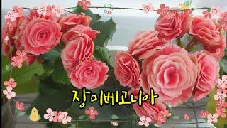 장미보다 더 예쁘고 일년 내내 꽃 볼 수 있는 장미베고…